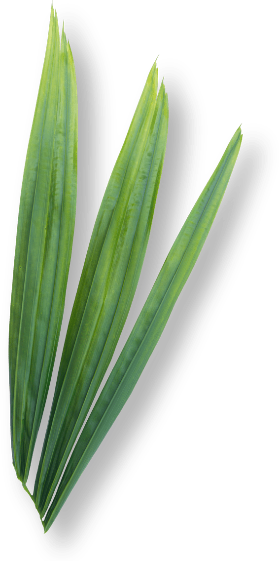 Prozis Saw Palmetto